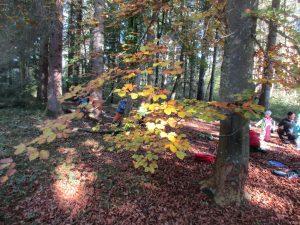 Mehrere kleine Kinder, Rucksäcke und Matten im Wald