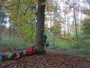 Ein Baum im Wald, an dem mehrere Rucksäcke lehnen und ein Kind von hinten, das durch den Wald läuft.
